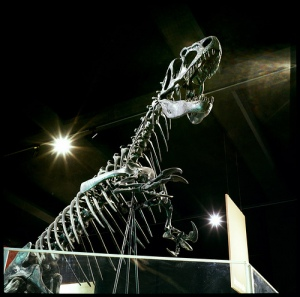A photo looking up at a dinosaur skeleton in the dark