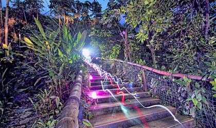 A photo of coloured lights travelling down steps surrounded by plants
