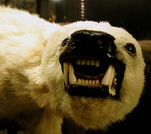 A snarling stuffed polar bear