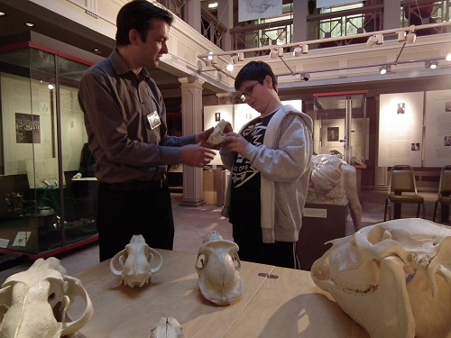 A man and boy handling animal skulls in a museum