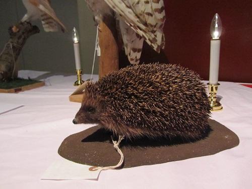 A taxidermy hedgehog
