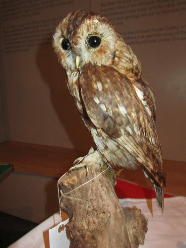 taxidermy stuffed owl