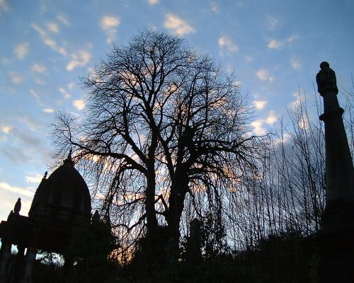 A tree and silhouetted historic buildings