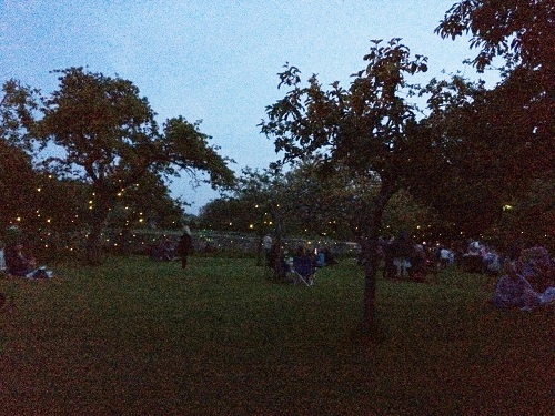 An orchard at dusk full of people and tiny glowing LED lights
